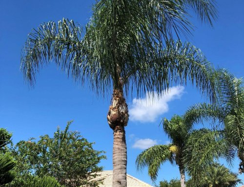 Pruning Trees and Palms